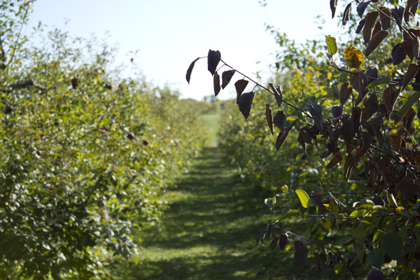 Door Creek Orchard